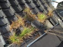 雑草が生い茂る粘土下地