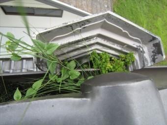 溜まった土から雑草が生えた集水器