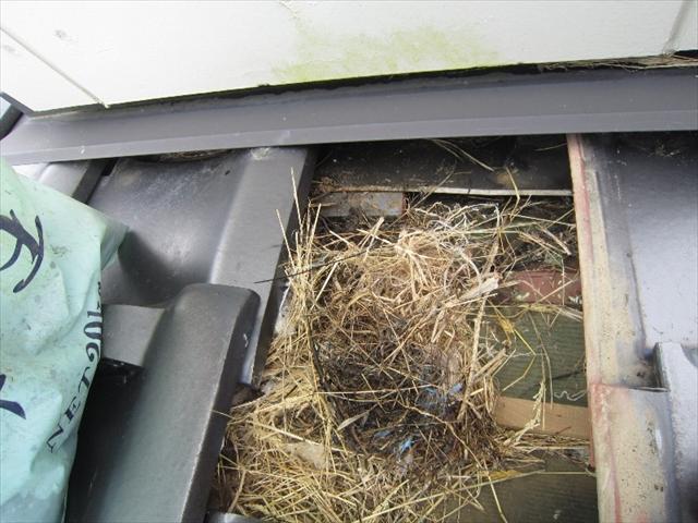 煙突の壁際にスズメの巣