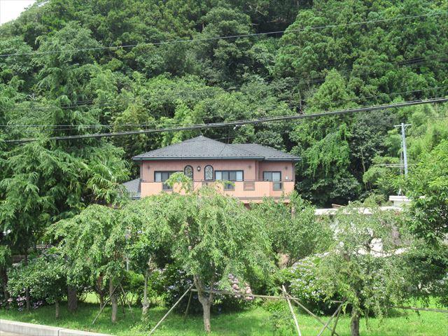 裏山が竹林