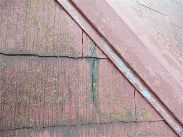 コロニアルの亀裂から苔