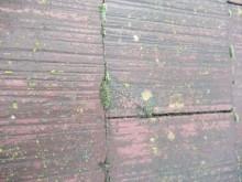 苔の生えたコロニアル