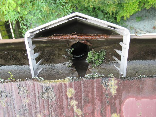 苔の生えた軒樋