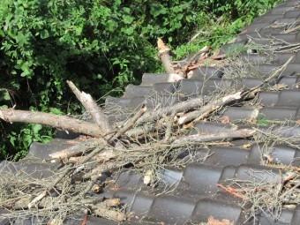 松の木が屋根に刺さる