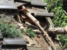屋根に突き刺さった松の木