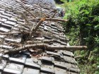倒木による瓦破損