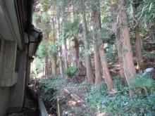 お宅に迫る裏山の杉